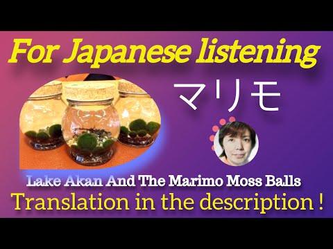Lake Akan And The Marimo Moss Balls - JOI Learn Japanese!