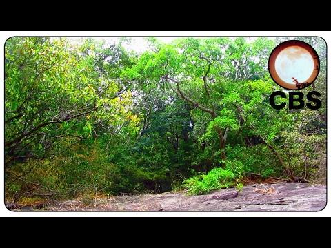 Relaxation Sounds Sri Lanka Jungle - Chaotic Bash Studios