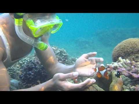 Rote Island Clown Fish