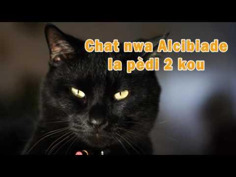 Chat nwa Alcibiade la pèdi 2 kou