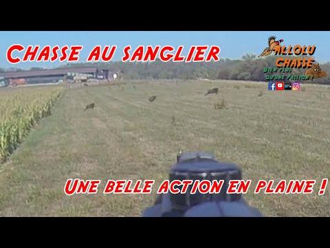 Chasse au sanglier, une superbe action en plaine !!