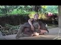 Kumpulan Video Lucu Penghibur Hati Yang Sedang Lara Dijamin Nyengir