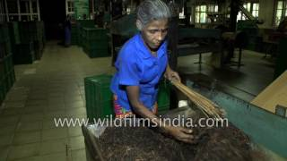 Morawaka Tea Estate: how the best Sri Lankan tea is made!