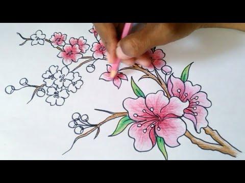 Menggambar Bunga Sakura Youtube