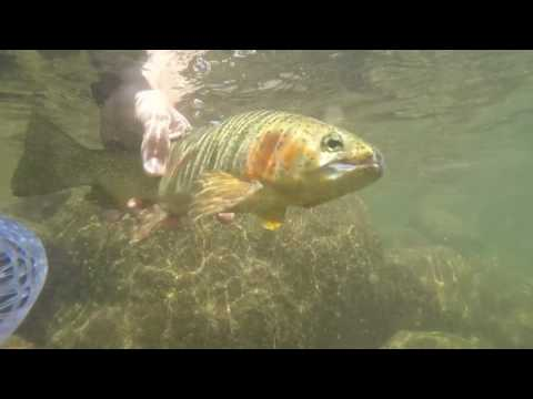 Fly Fishing Fishing Roaring Fork River Colorado