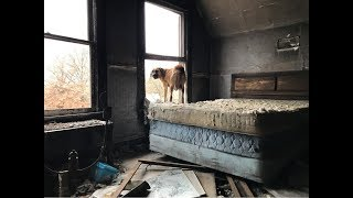 Mom & Pups rescued from Freezing temps - Stray Rescue of St.Louis