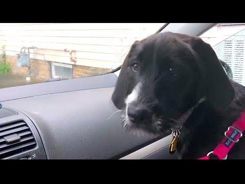 Poppy The Smartest Dog Ever ???