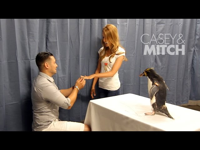 This Penguin Proposal Will Melt Your Heart Bridalguide
