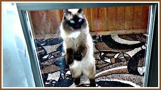 Видео про кота. Закрыли на БАЛКОНЕ!