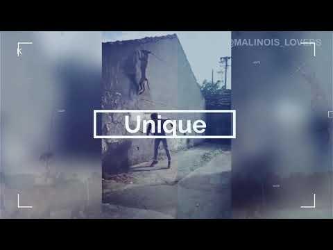 Belgian Malinois Lovers Channel !