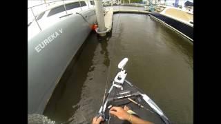 Goldcoast fishing mangrove jack Trent Jepson