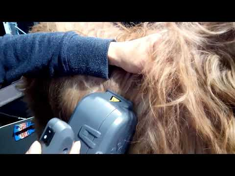 Auto Dog Brush : dematting a briard