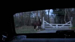 Video horse chases car + tries to drive it  filmed by Twombly Publishing download MP3, 3GP, MP4, WEBM, AVI, FLV Desember 2017