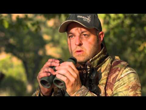 Swarovski SLC Binoculars Hunting Video