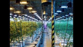 NJ:  Door To Door Marijuana Delivery