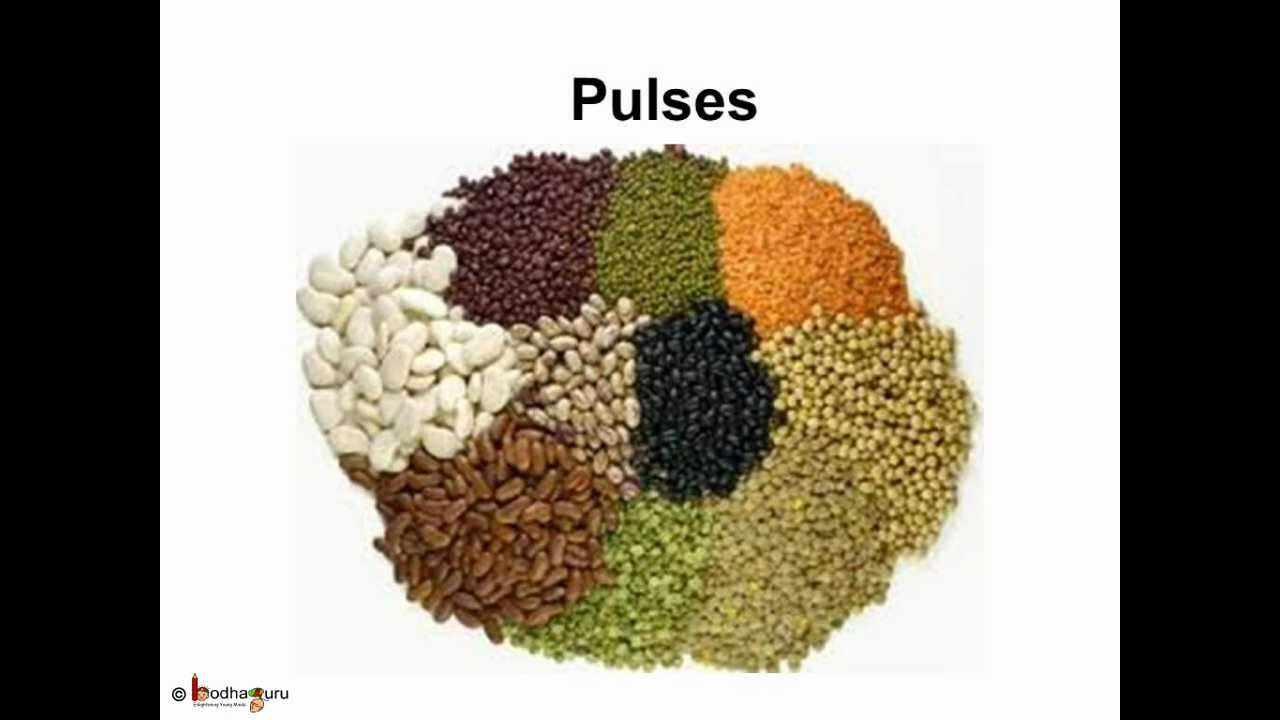 Science - Edible Parts of Plants - Telugu - YouTube