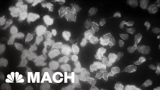 Can Physics Explain The Origin Of Life On Earth? | Mach | NBC News