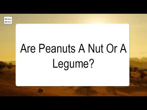 are-peanuts-a-nut-or-a-legume