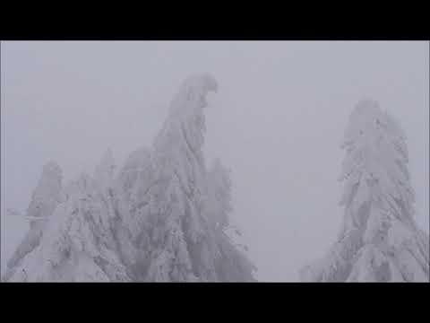 13.01.2019 - Unwetterartiger Schneesturm mit katastrophalem Schneebruch rund um Sankt Enlgmar