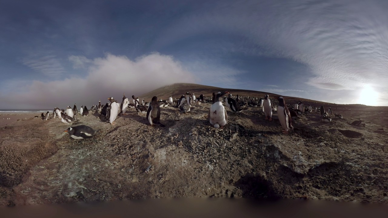 Caminar entre pingüinos