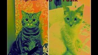 Epic Cat Fight! Встреча двух котов: брачные игры или греко-римская борьба?!