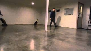 Level 1 (basic) Dog Obedience Training Test: Lex And Mickie