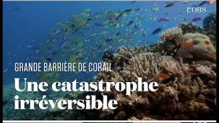 En Australie, la moitié des coraux de la Grande Barrière ont disparu en à peine 25 ans