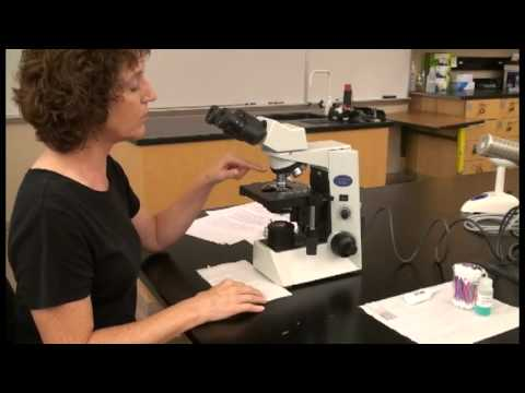 Microscope Tutorial - Detailed Version