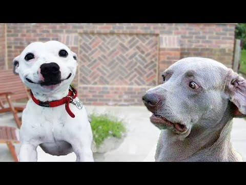 Funniest Cats, Dogs & More | Try Not to Laugh! (Funny Animal Video Compilation) [2020]