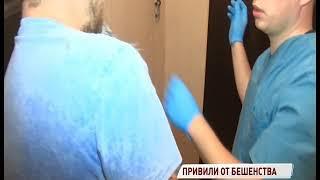В Ярославле у домашней собаки выявлено бешенство