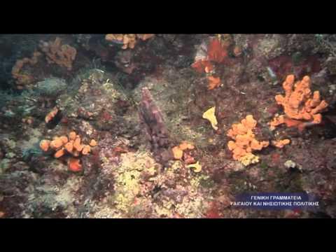 Σάμος - Dive Guide Greece
