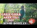 Konslet Lovebird Betina Semi Konslet Dengan Setingan Anak Tiri Jadi Minor Dobelan  Mp3 - Mp4 Download