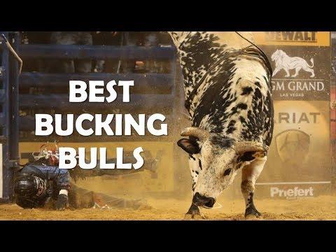 Best Bucking Bulls Ever