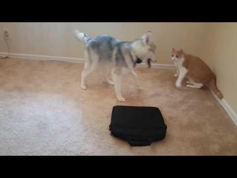 Dog versus Cat 2