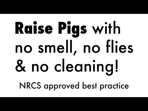 No-smell, No-flies, No-cleaning Pigs & Chickens