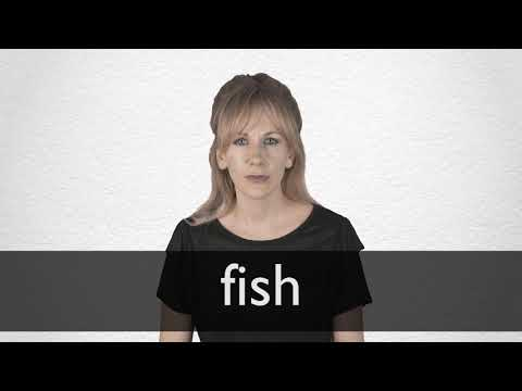 How To Pronounce FISH In British English