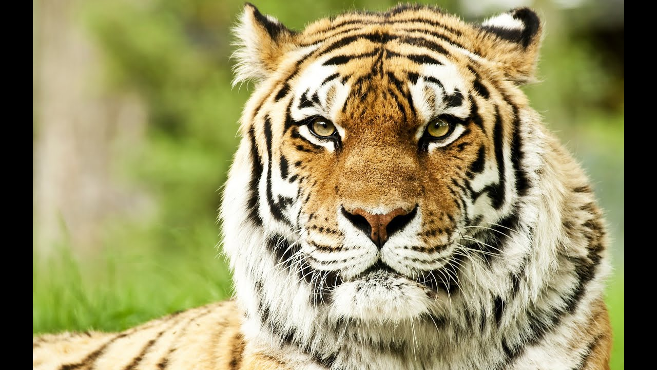Best Wildlife Photos National Geographic Wild Life and ...