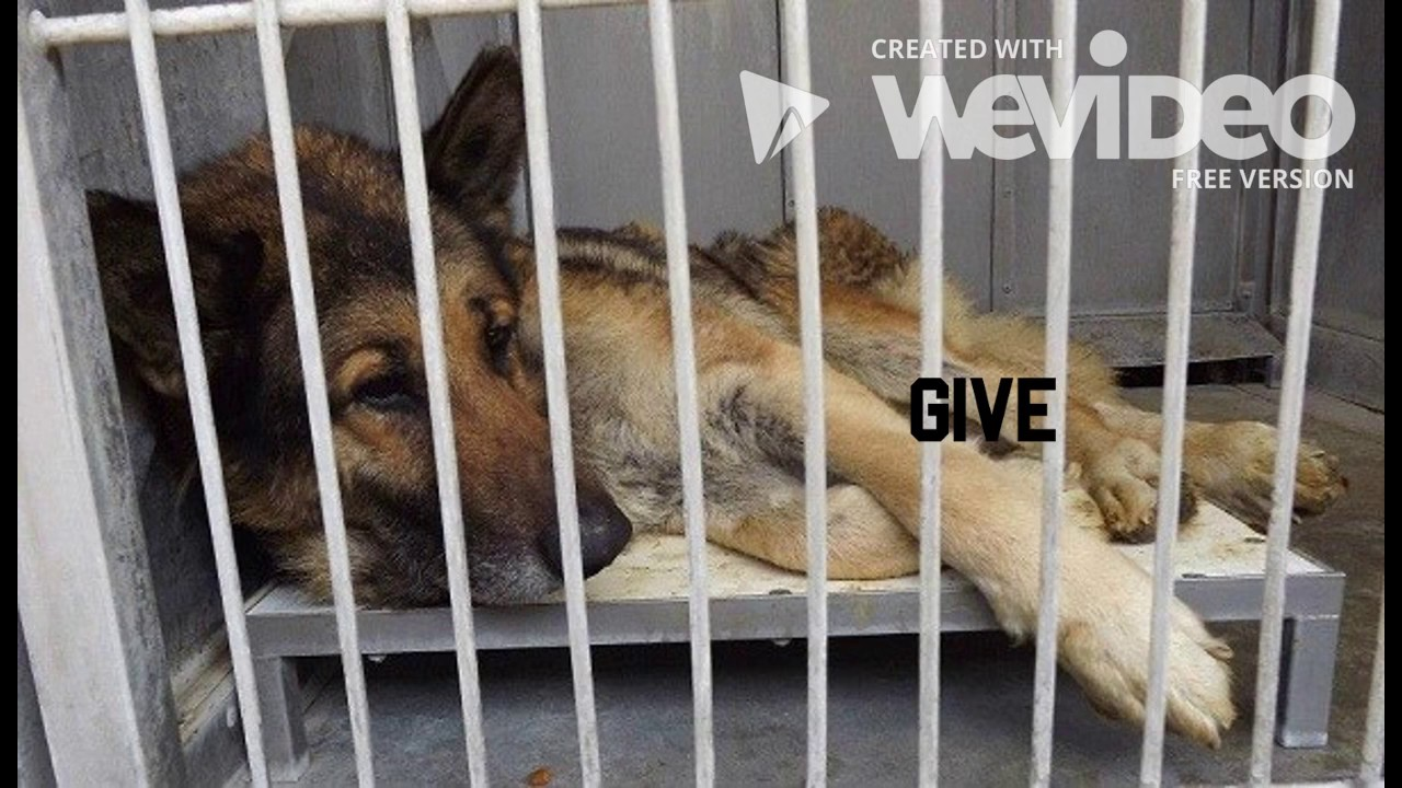 Finding a solution for overcrowded animal shelters