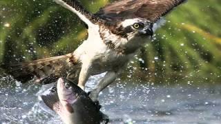 ikan di laut asam di darat....