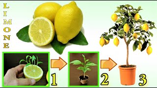 come far nascere un limone dal seme a costo zero, how to grow fig tree, limon, citron