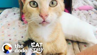 Smartest Stray Cat Follows Woman Home | The Dodo Cat Crazy