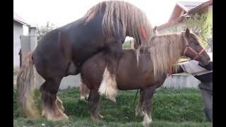 At Çiftleşmesi | Hayvan Çiftleşmeleri