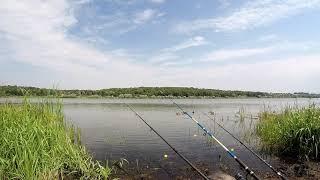 Дикие утки на рыбалке Людей совсем не боятся