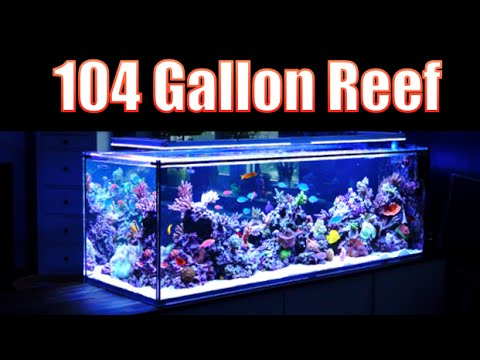 BREATHTAKING Reef Aquarium! HD -104 Gallons