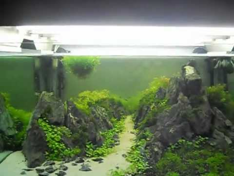 Mountain into aquarium my aquarium planted 350 litres for Aquarium 350 litres