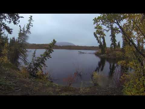 Phonography : Wrangell St. Elias NP, Twin Lakes, Alaska (62.529169, -143.261632)