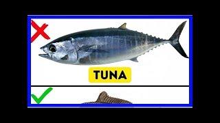 9Kinds ofFish You Shouldn't Eat