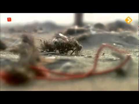 Verlos de Zee in Vroege Vogels