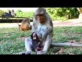 Fauna monkey tries to wean Very small baby Flit | Baby Flit Very small mom Fauna weaning, Mila troop
