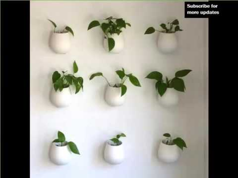Indoor Hanging Plants | Indoor House Or Office Plants Picture Collection Part 33